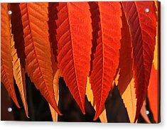 Leafy Valance Acrylic Print