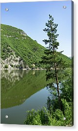 Lean In - A Lone Pine On The Lake Shore Acrylic Print