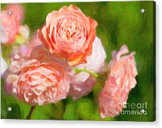 Leander English Rose Acrylic Print