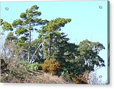 Leaning Trees On Hillside Acrylic Print