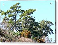 Leaning Trees On Hillside Acrylic Print