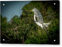 Acrylic Print featuring the photograph Leap Of Faith by Marvin Spates