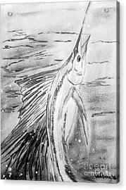Leaping Sailfish - Black And White Acrylic Print by Scott D Van Osdol