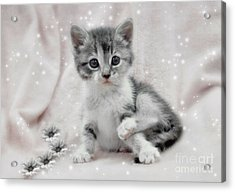 Learning To Sit Like A Lady Acrylic Print