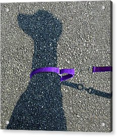 Leash Required On Sunny Days Acrylic Print