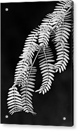 Leaves-1-st Lucia Acrylic Print by Chester Williams