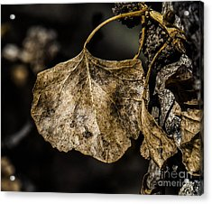 Leaves 4 Acrylic Print