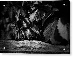 Leaves #9671 Acrylic Print