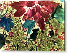Leaves And Berries - Inversed Acrylic Print by Randy Muir