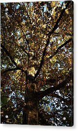 Leaves And Branches Acrylic Print