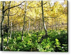 Leaves And Ferns Acrylic Print by Caroline Clark