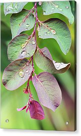 Leaves And Raindrops Acrylic Print