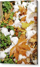 Leaves And Snow Acrylic Print