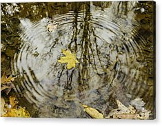 Leaves And Water Acrylic Print by Andrew McElvery