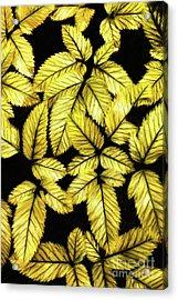 Leaves Ap Acrylic Print