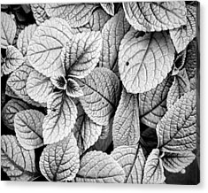 Leaves Black And White - Nature Photography Acrylic Print by Ann Powell