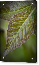 Acrylic Print featuring the photograph Leaves by Bob Decker