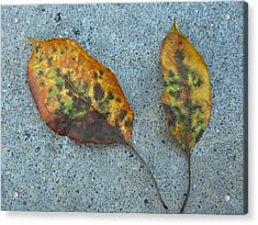 Leaves Acrylic Print by Gonca Yengin
