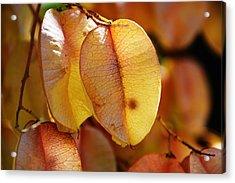 Leaves Hang For Fall-gerorgia Acrylic Print