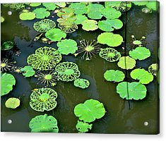 Acrylic Print featuring the photograph Leaves Imagery by Yen