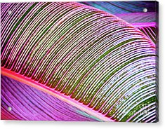 Acrylic Print featuring the photograph Leaves In Bright Colors 546 by D Davila