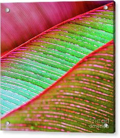 Acrylic Print featuring the photograph Leaves In Color  by D Davila