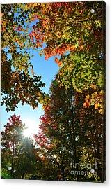 Leaves Of Change Acrylic Print