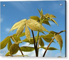 Acrylic Print featuring the photograph Leaves Of Gold by Peg Urban