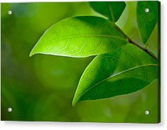Leaves Of Green Acrylic Print by Az Jackson
