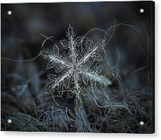 Leaves Of Ice Acrylic Print
