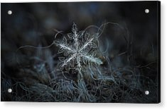 Leaves Of Ice, Panoramic Version Acrylic Print