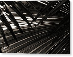 Leaves Of Palm Black And White Acrylic Print by Marilyn Hunt
