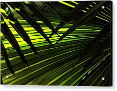 Leaves Of Palm Color Acrylic Print by Marilyn Hunt