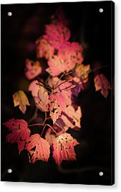 Acrylic Print featuring the photograph Leaves Of Surrender by Karen Wiles