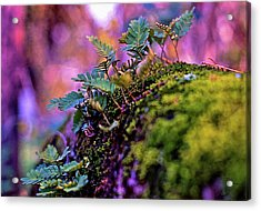 Leaves On A Log Acrylic Print