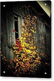 Leaves On An Old Barn Acrylic Print by Joyce Kimble Smith