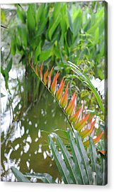 Leaves On Fire Acrylic Print by Jessica Rose