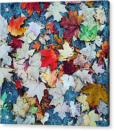 Leaves On The Sidewalk Acrylic Print by Robert Nguyen