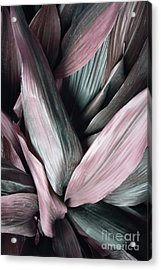 Leaves In Pink And Blue Shades Acrylic Print