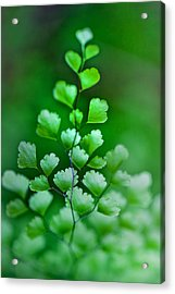 Leaves Rising Acrylic Print