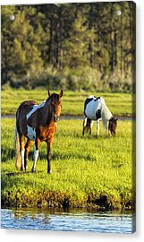 Leaving The Chincoteague Ponies Acrylic Print