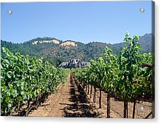 Ledson Winery And Vineyard Sonoma County California Acrylic Print by George Oze