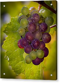 Leftover Pinot Cluster Acrylic Print