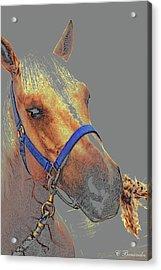 Legend Of A Horse Acrylic Print