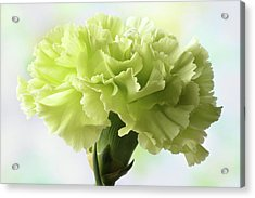 Acrylic Print featuring the photograph Lemon Carnation by Terence Davis