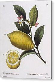 Lemon Acrylic Print by Pancrace Bessa