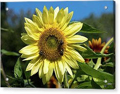 Lemon Queen In September I Acrylic Print by Jeff Severson