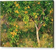 Acrylic Print featuring the painting Lemon Tree by Henry Scott Tuke