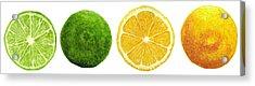 Lemons And Limes Acrylic Print by Kathleen Skinner