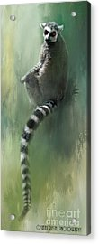 Lemur Catching Rays Acrylic Print
